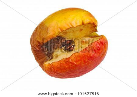 Rotten red apple isolated on a white background