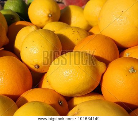 Orange And Sicilian Lemons For Sale In Greengrocers Shop