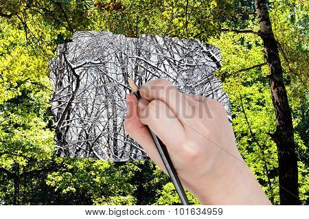 Pencil Draws Bare Trunks In Winter Forest