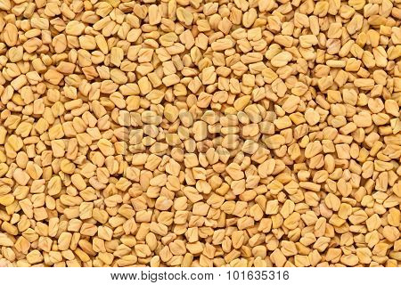 Organic Fenugreek.