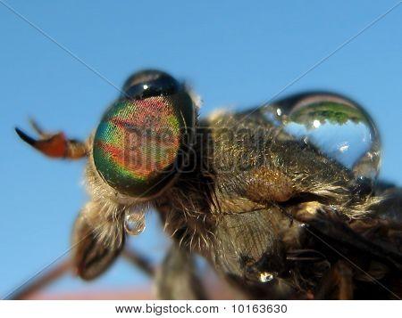 Gadfly