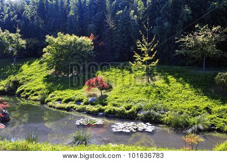 Japanese Garden Park Anduze Bamboo