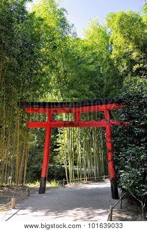 Park Anduze Bamboo