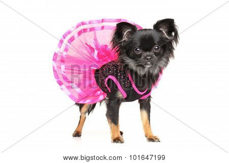 Chihuahua Fashionable Dog Clothes