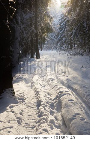 Sun Rays In The Winter Forest