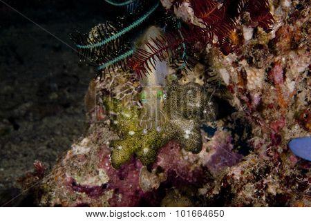 Seeking Protection In Coral Block