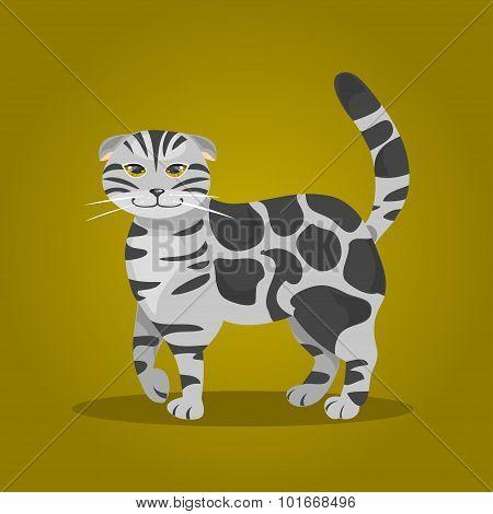 Scottish Fold Cat. Vector Illustration