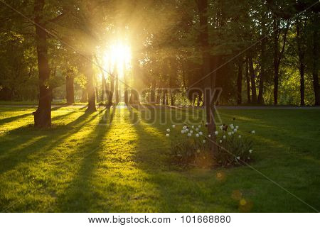 Beautiful nature at evening in spring forest trees with sun rays Concept of sun wonderland Summer scene Landscape in autumn season Sunlight background Summertime, sun scene. Backlit.