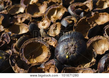 Mangosteen shell sunlight drying process