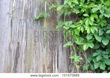 Wooden Fence and Green Plant