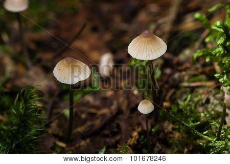 Small Mushrooms Toadstools On Fallen Tree, Macro, Selective Focus