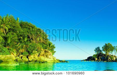 Landscape Palms Panorama
