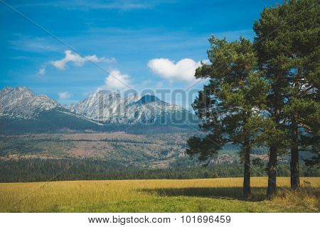 Pine tree and high mountain range on the background. Natural landscape.