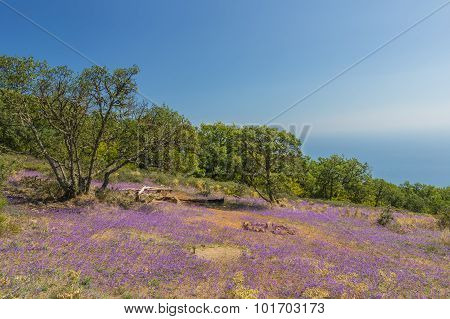 Flowers on a green plateau above the gulf in coast