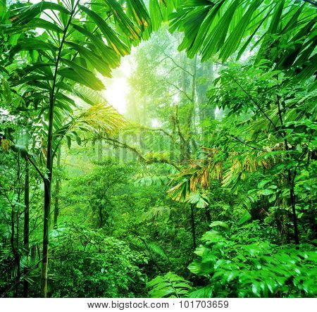 Fresh green rainforest, summer time, National park of Costa Rica, wonderful wild nature of Central America