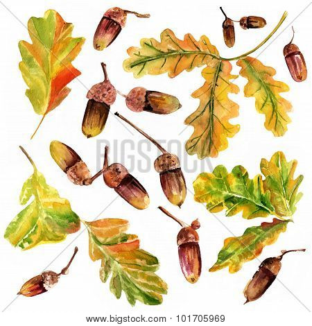 A set of watercolor oak leaves and acorns, autumn or wine themed design elements
