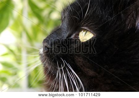 Gaze Cat