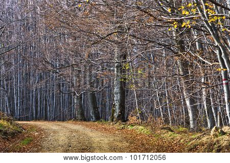 Gravel country road through beautiful dense forest in late autumn at Homolje mountains