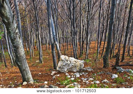 Steep terrain in a dense forest with a few rocks at Homolje mountains on a sunny autumn day