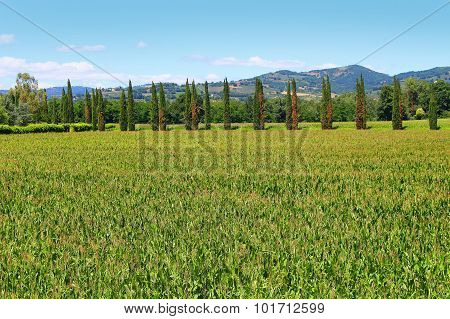 Italian Wheat Fields