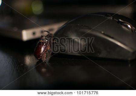 Computer bug, Rhino bug