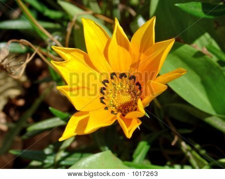Spanish Flower 2