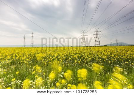 Yellow Rapeseed Flower Field And Blue Sky With Electric Post, In Greece