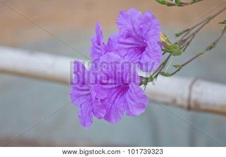 Flower Waterkanon