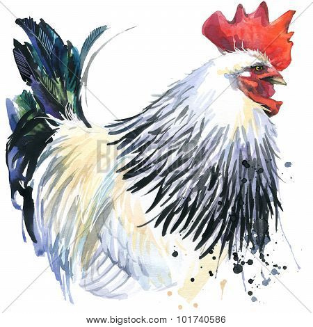 rooster graphics, rooster illustration with splash watercolor textured background. illustration wate