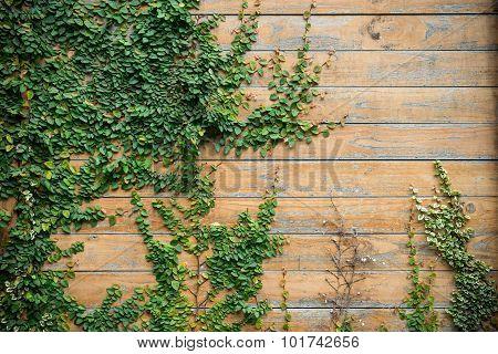 Wood Wall With Tree 2