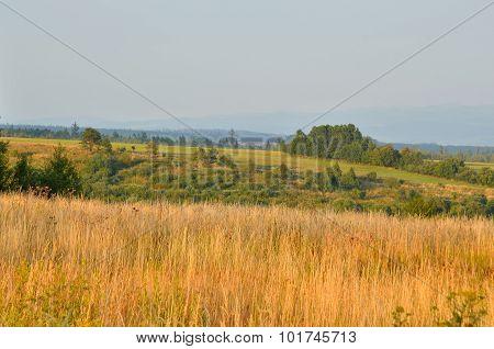 Summer rural landscape.