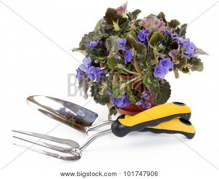 Purple Violet and Garden Tools on a white background