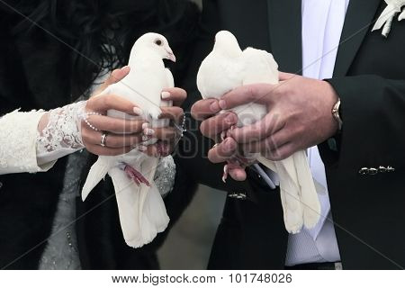 Two white Pigeons in the hands of the Newlyweds
