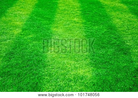Green grass on the football field. Nature background