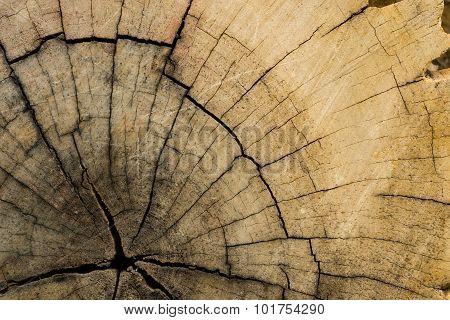 Tree Lumber Closeup