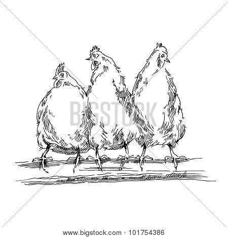Chiken sketch