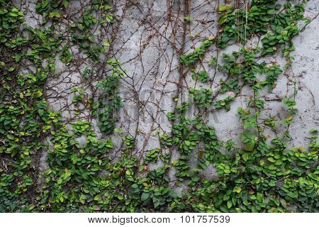 Concrete Wall And Plant