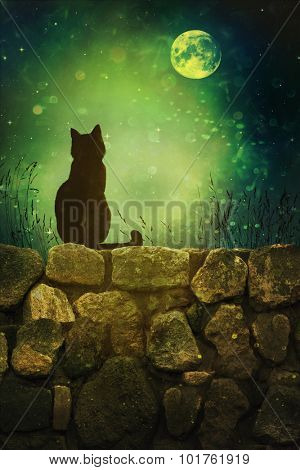 Black cat on old rock wall Halloween night