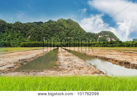 Blue Sky With Land And Green Grass
