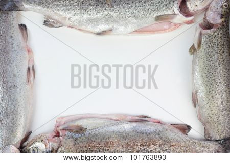 Trout fish frame.