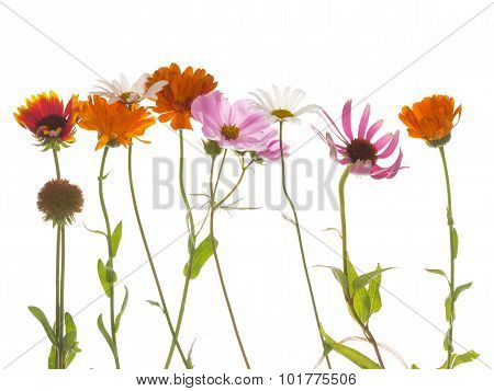 Flowers On A White Background