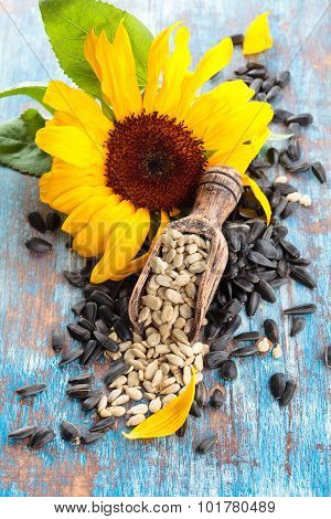 Sunflower And Sunflower Seeds.