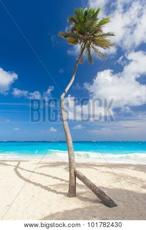 Bottom Bay is one of the most beautiful beaches on the Caribbean island of Barbados. It is a tropical paradise with palms hanging over turquoise sea