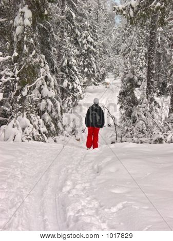 Winter Forest. Woman Skier