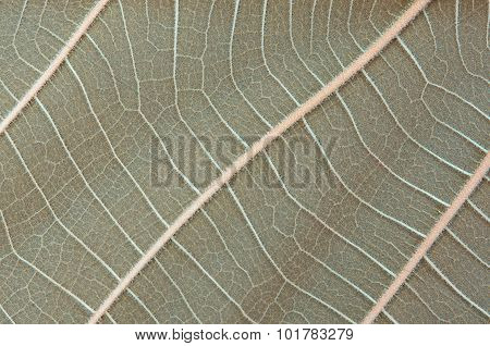 leaves patterned Beautiful