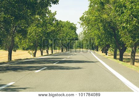 Tree Lined Asphalt Road
