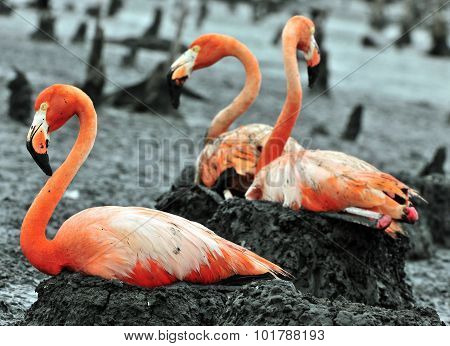 Great Flamingo Birds On The Nest