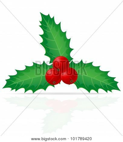 Christmas Holly Berry Vector Illustration
