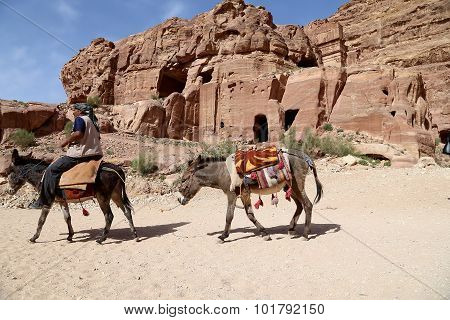 Bedouin Men On Mules In Petra,  Jordan