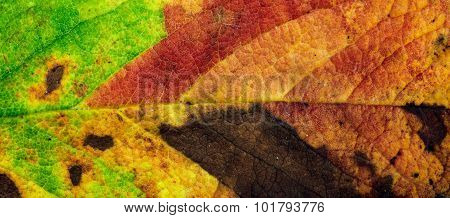 Autumn Leaf Background.